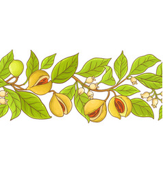 nutmeg branch pattern vector image