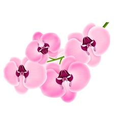 Orchid on a white background vector image