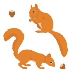 Two squirrels vector