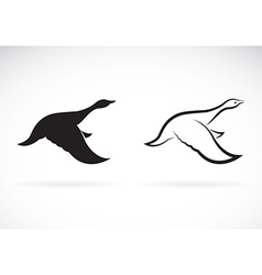 image of an flying wild duck vector image vector image