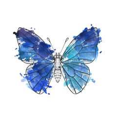 Drawing butterfly vector