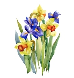 Watercolor Summer Garden Narcissus Blooming Flower vector