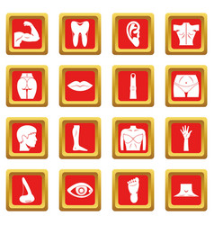 body parts icons set red vector image vector image