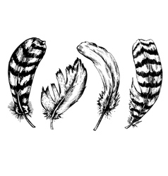 Set of vintage feather isolated on white vector image