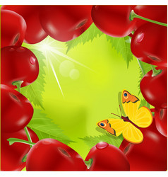 frame of cherry vector image