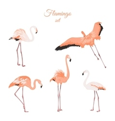 Set of isolated pink flamingos on white background vector image vector image