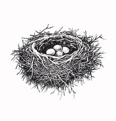 birds nest with eggs hand drawn vector image