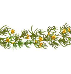 rooibos branch pattern vector image