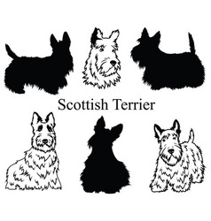 scottish terrier set collection pedigree dogs vector image
