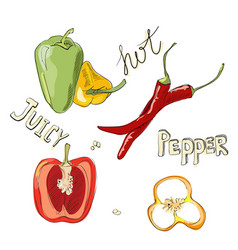 Sweet and hot peppers color set of hand drawn vector