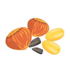 hazelnuts peanuts and sunflower seeds food item vector image vector image