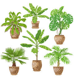 potted tropical plants set vector image vector image