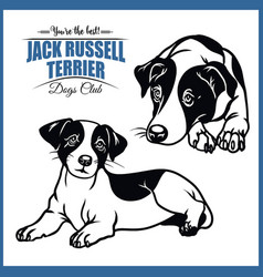 Jack russell terrier - for t vector