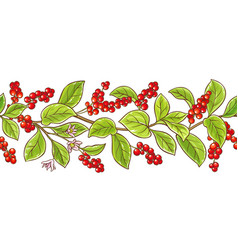Schisandra branch pattern vector