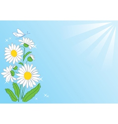 summer card with flowers and rays vector image vector image
