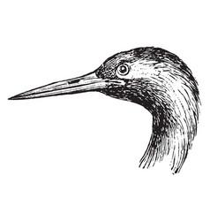 crane head and leg vintage vector image