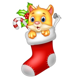 Cute cartoon cat in the Santa Claus sock vector image