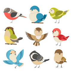 Set cute little colorful birds isolated vector