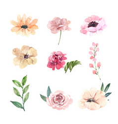 Set watercolor pink peony hand-drawn floral vector