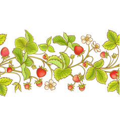 strawberry plant pattern vector image