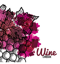 best wine grapes fruit vector image