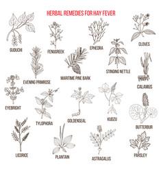 Best herbal remedies for hay fever vector