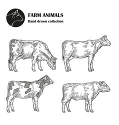 Hand drawn milk cow set isolated on white vector