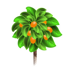 orange tree with mature fruits isolated on a vector image