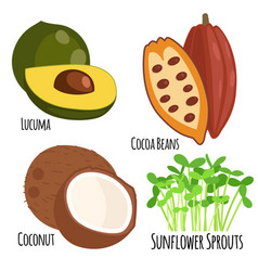 vegetarian superfood healthy vegetable eco food vector image
