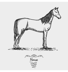 horse engraved hand drawn in vector image vector image