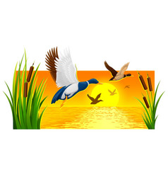 wild ducks soaring from reeds vector image vector image