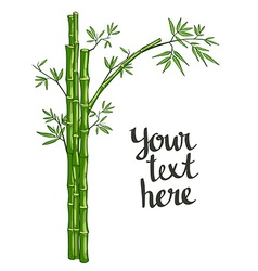 Bamboo green vector