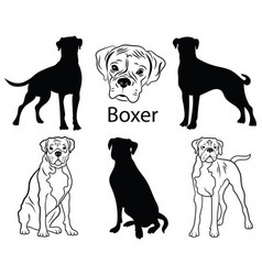 Boxer set collection pedigree dogs black vector