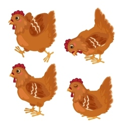 Cartoon chicken in in four poses animals vector