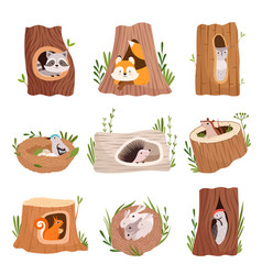 holes in tree home hollow for wild animals trunk vector image