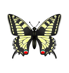 yellow butterfly isolated on vector image