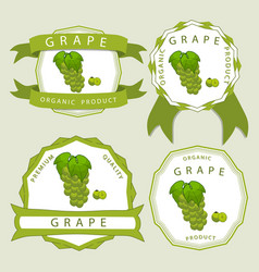 the colored grape vector image