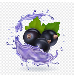 blackcurrant juice splash forest berries smoothie vector image