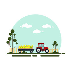 flat red tractor with a cart corn the vector image