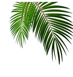 Palm Leaf on White Background with Place for Your vector