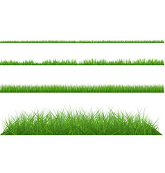 green grass dense big and small vector image