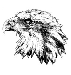 bald eagle profile head vector image