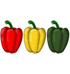 bell peppers hand drawn colored sketch vector image