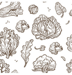 cabbage and broccoli cauliflower and lettuce vector image
