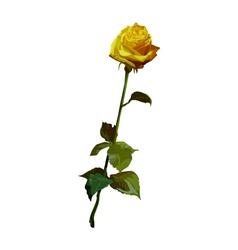 Rose yellow vector