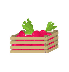 wooden box red garden radish for home eating vector image
