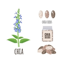 Superfood chia seeds set in flat style vector image vector image