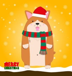 Merry Christmas cute big fat Welsh Corgi dog vector image