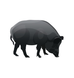 Single wild pig vector