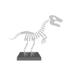 museum dinosaur skeleton icon vector image